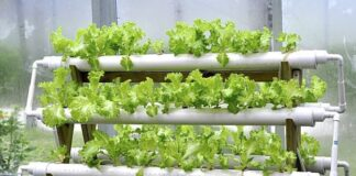 Hydroponic system PVC pipes